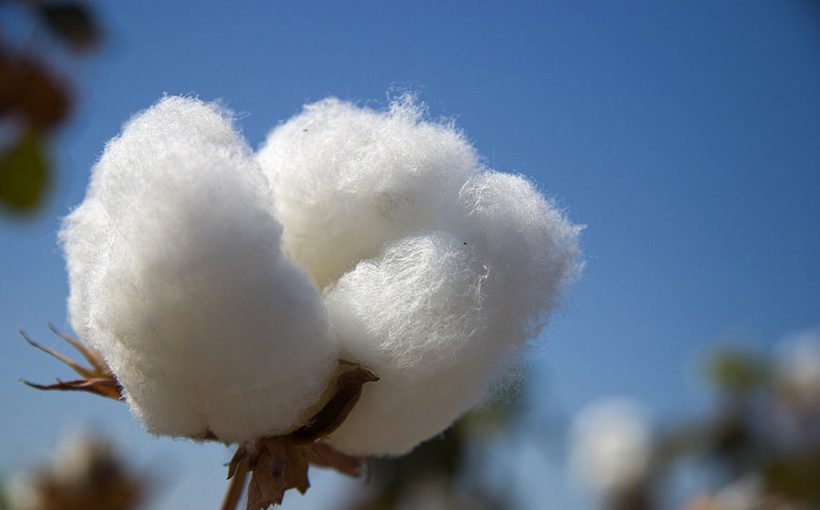 Cotton and Environment...